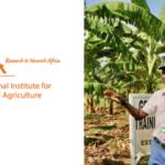 International Institute of Tropical Agriculture [IITA] Vacancies 2